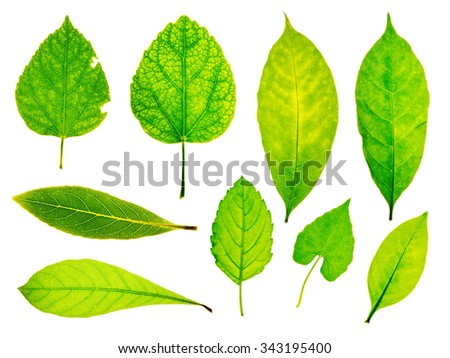 Collection of garden green leaves on white background - stock photo