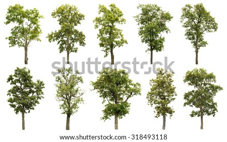 Collection of great tree isolated on white background - stock photo