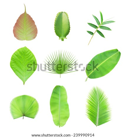 Collection of green leaf isolated on white background - stock photo