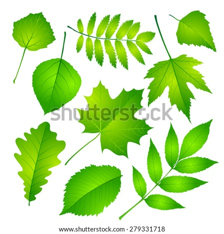 Collection of green leaves.  - stock photo