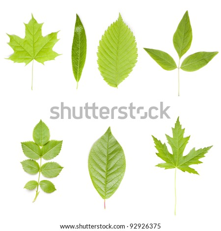 Collection of green tree leaves