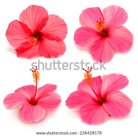 Collection of hibiscus with leaves isolated on white background - stock photo