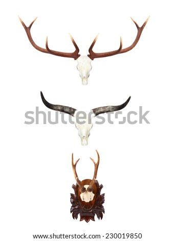 Collection of hunting trophies. Animal skulls with antlers and horns. - stock photo