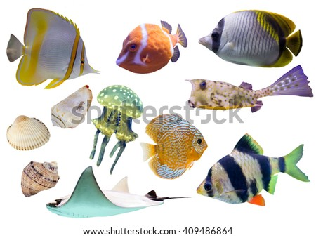 Collection of isolated fish and shells on white background - stock photo