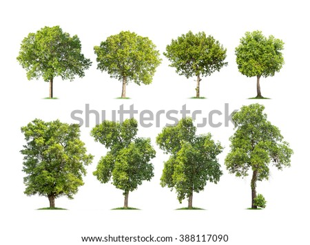 Collection of isolated trees on white background - stock photo