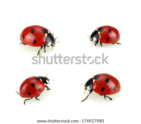 Collection of ladybugs isolated on white  - stock photo