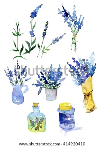 Collection of lavender flowers on a white background. Vintage flowers set. Herbs from garden. Herbs. Herbs isolated on white. Herbs plant. Herbs and spice. Green herbs. Watercolor lavender.  - stock photo