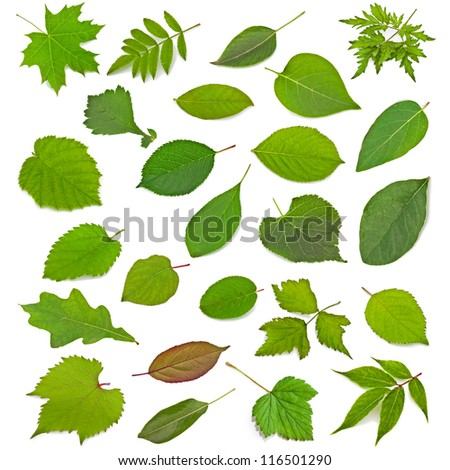 Collection of leaves isolated on a white background - stock photo