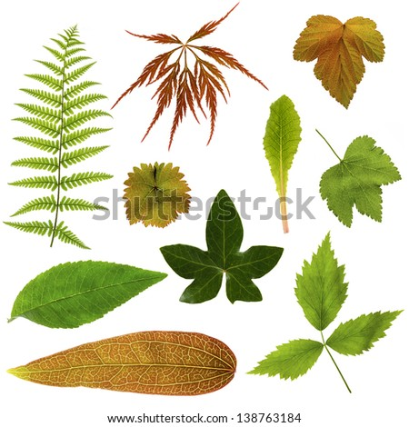 Collection of  leaves on a white background - stock photo