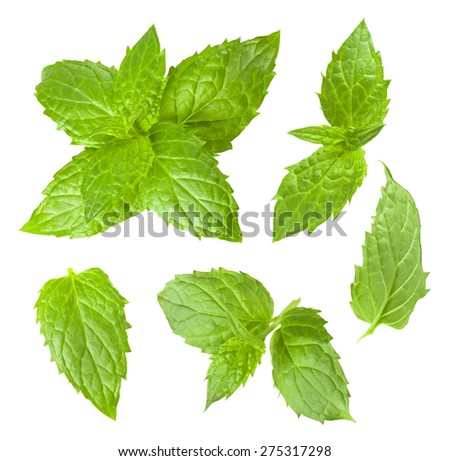 Collection of mint leaves isolated on white background - stock photo