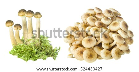 collection of mushroom set isolated on white