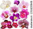 Collection of orchid flower isolated on white - stock vector