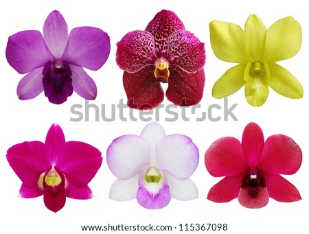 Collection of orchid flower on white background. - stock photo