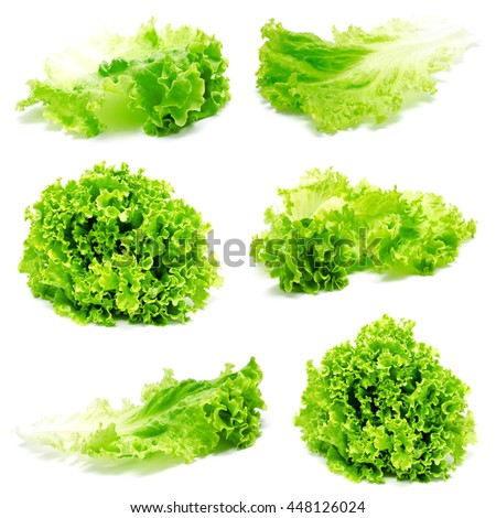 Collection of photos fresh lettuce leaves isolated on a white background - stock photo