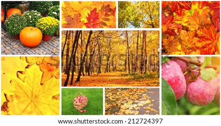 Collection of photos with autumn leaves and apples