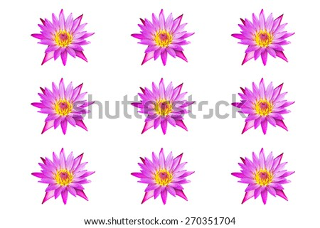 collection of pink lotus blooming isolated on white background   - stock photo