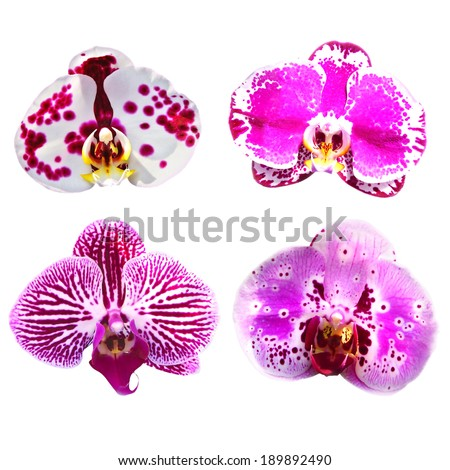 Collection of pink orchid flowers isolated. - stock photo
