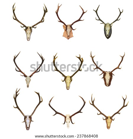 collection of red deer hunting trophies ( Cervus Elaphus ), beautiful bucks, isolation over white background - stock photo