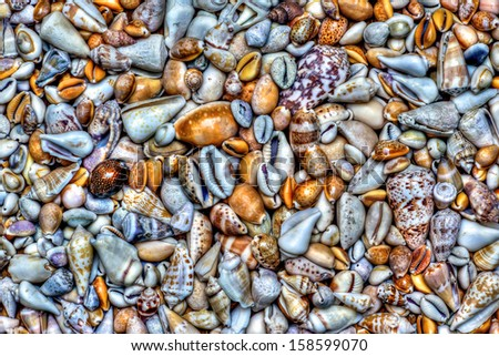 Collection of seashells - stock photo