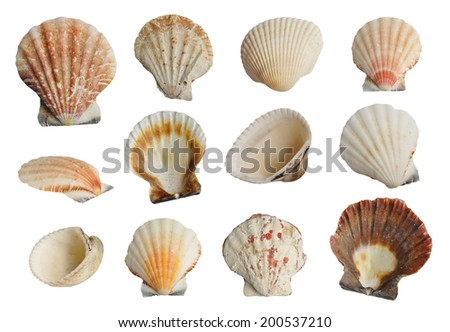 Collection of seashells isolated on white background  - stock photo