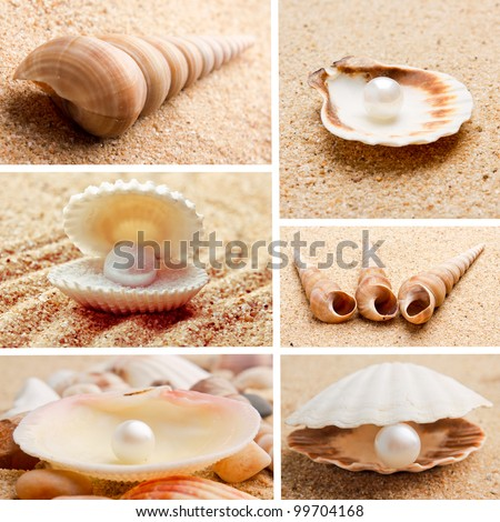 collection of seashells. pearl on the seashell . The exotic sea shell . treasure from the sea. - stock photo