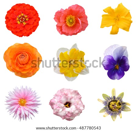 Collection of seasonal open flowers