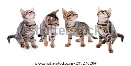 Collection of small striped kitten isolated on white - stock photo
