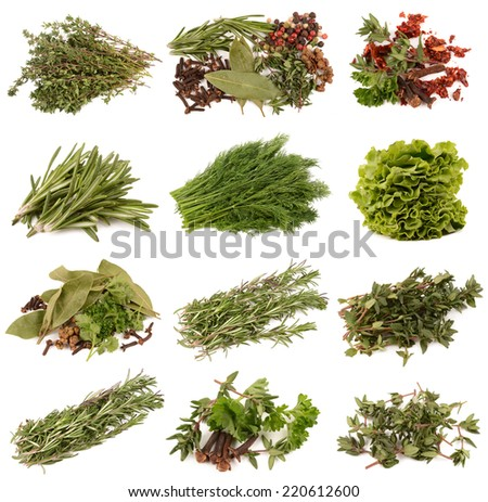 Collection of spices on white background - stock photo
