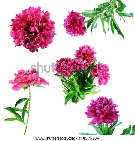 Collection of summer flowers isolated on white background - stock photo