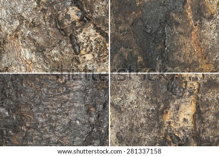 Collection of texture on burnt birch wood, close up photo - stock photo