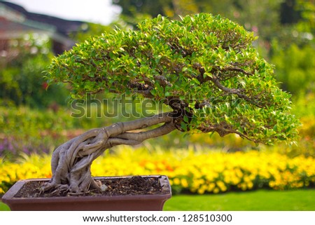 collection of the best bonsai - stock photo