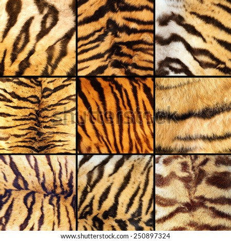 collection of tiger stripes, beautiful natural textures of pelts - stock photo