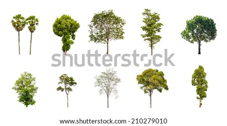 Collection of Tree isolated on a white background - stock photo