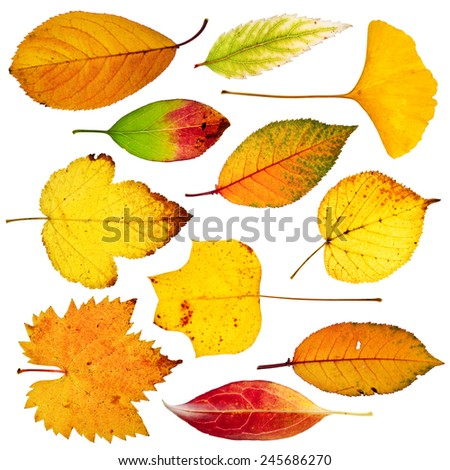 collection of tree leaves isolated on white background - stock photo