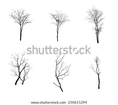 Collection of trees silhouette  - stock photo