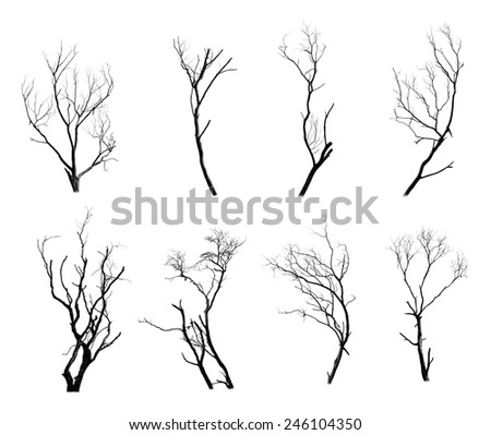 Collection of trees silhouette on white background  - stock photo