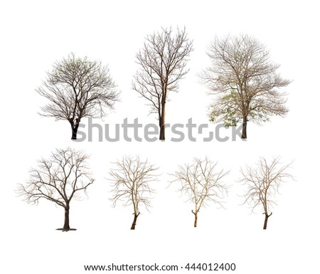 Collection of trees with no leaves or winter tree or dead tree on white background