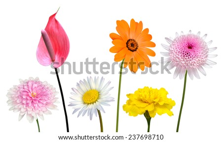 Collection of Various Colorful Flowers and Wildflowers with Green Stick Isolated on White Background. Vibrant Red, Blue, Pink, Purple, Yellow White, and Orange Colors. Bunch of wildflowers - stock photo