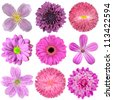 Collection of Various Pink, Purple, Red Flowers Isolated on White Background. Selection of Nine Periwinkle, Rose, CornFlower, Lily, Daisy, Chrysanthemum, Dahlia, Carnation, Primrose Flowers - stock photo