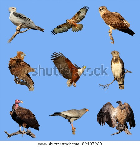 Collection of various species of African birds of prey on a blue sky background - stock photo