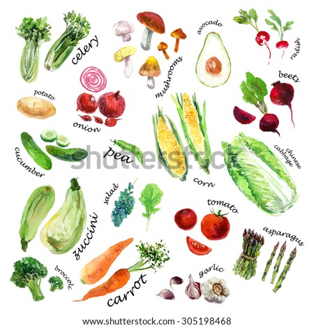 Collection of watercolor hand drawn vegetables on white background. Good for book illustration, magazine or journal article. - stock photo