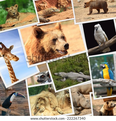 Collection of wild animals photography - stock photo
