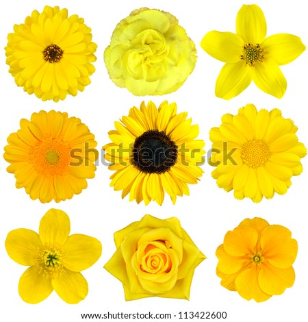 Collection of Yellow Flowers Isolated on White. Various set of Dahlia, Dandelion, Daisy, Gerber, Sunflower, Marigold Flowers - stock photo