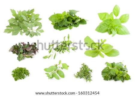 Collection on herbs isolated on white background - stock photo
