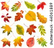 collection set of  beautiful colorful autumn leaves close up  isolated on white background - stock photo