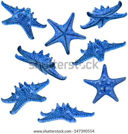 Collection set of Blue starfish isolated on white background  - stock photo
