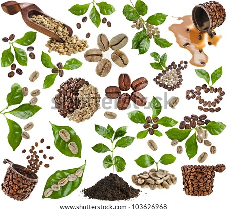 Collection set of coffee grains beans with leaves of coffee tree isolated on white - stock photo