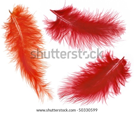 Collection set of colorful feathers  isolated on white background