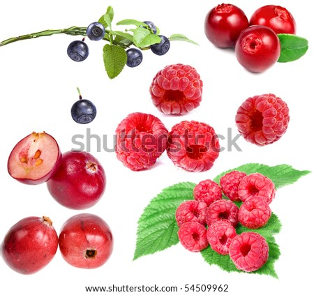 collection set of forest berries isolated on a white background - stock photo