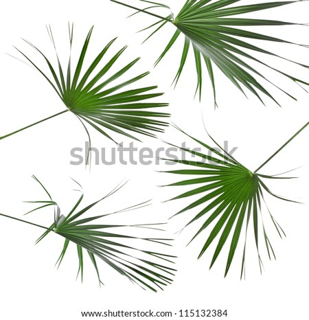 Collection set of Green leaves of palm tree isolated on white background - stock photo